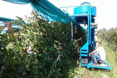 KOKAN - Air Jet Berry Harvester