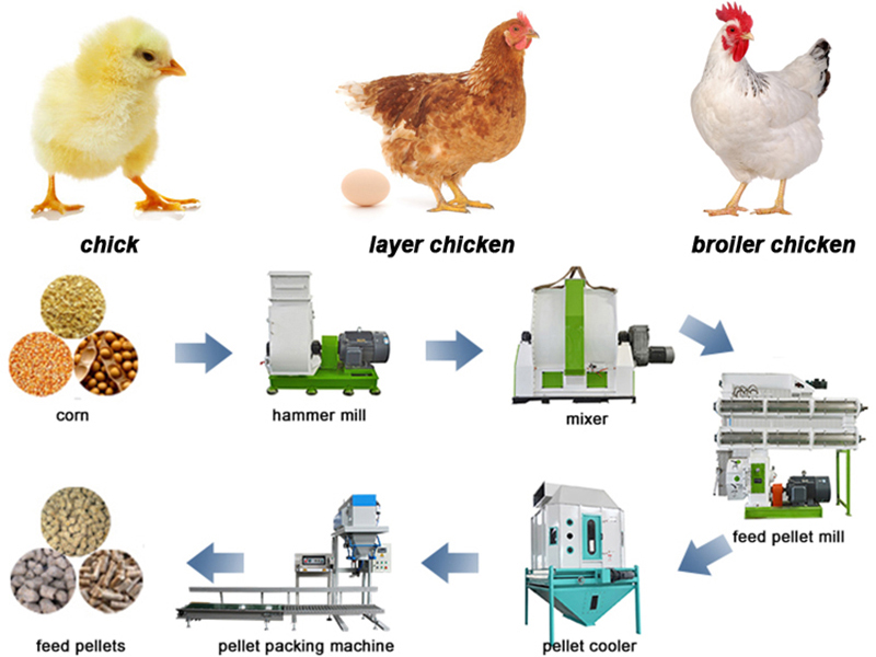 The Best Formula For Making Broiler Chicken Feed