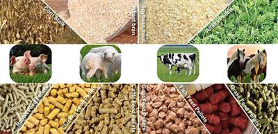 Things You Need To Know About Feed Pellets Raw Material-4