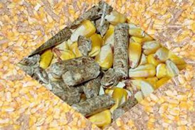 Things You Need To Know About Feed Pellets Raw Material