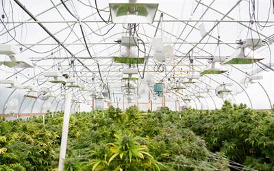 Cannabis Greenhouses