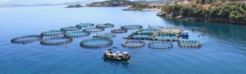 Deployable Oxygen Concentrator Systems for Aquaculture - Agriculture - Aquaculture
