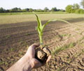 Food Security - an issue for the UK too, says Soil Association