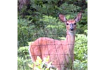Nixalite - Deer Blocker Deer Fencing