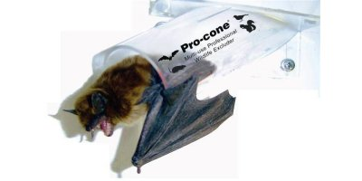 Image result for Bat Pro Cone