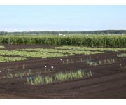 Muck Crops Field Day is July 31