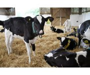 Ohio State Workshop to Offer Insight on Dairy Reproduction and Genomics