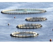 Ohio State Offers Aquaponics Fish Farming Workshop July 10-11