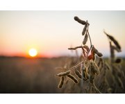 Ohio's 2015 Soybean Crop Performance Trials Reveal Higher than Expected Yields