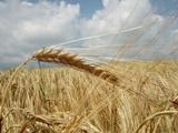 Ohio State Economist Offers 2016 Grain Market Outlook
