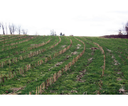 March 29 Soil Health Workshop Focuses on Benefits of Cover Crops