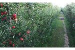 Irrigation solutions for Apple Crops