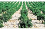 Irrigation solutions for Citrics Crops - Agriculture - Crop Cultivation