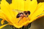 Taking account of the environment of bees to better evaluate insecticide-related risks