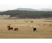 EPA sued for scrapping livestock data collection