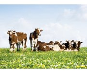 Scientists help farmers create greener dairies