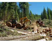 Initiative: Carbon-credit dollars for timber lots