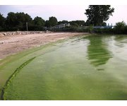 Ohio asks Neighboring States to Help Fight Lake Erie`s Algae