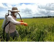 Review reveals problems protecting workers from pesticides