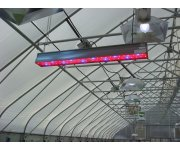 Lighting strategies for LEDs in greenhouse horticulture