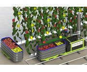 International partnership will develop first market ready sweet pepper harvesting robot