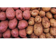 China - Netherlands cooperation on improvement of China potato production