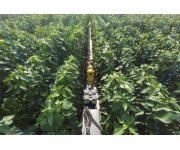 Sweeper (Sweet pepper harvesting robot) tested in greenhouse Belgium