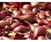 Shallots in Indonesia: Searching for suitable cropland