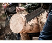 New EU Forest Strategy: Better Management can Boost Rural Jobs, say MEPs