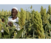 FAO expands support for national food security information systems in South Sudan