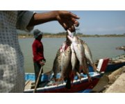 Indonesia, FAO to strengthen fisheries and aquaculture cooperation