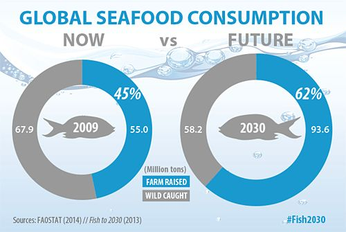 Fish farms to produce nearly two thirds of global food fish supply by 2030