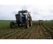 Agriculture`s greenhouse gas emissions on the rise