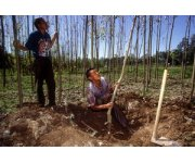 New roadmap for boosting small-scale and family forest producers