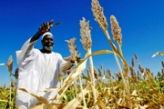 Huge opportunities for agricultural growth in West Africa
