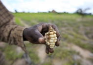 El Niño set to have a devastating impact on southern Africa's harvests and food security
