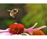 Pollinators vital to our food supply under threat