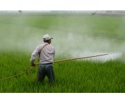 New pesticide guidelines seek faster phase-out of risky toxins