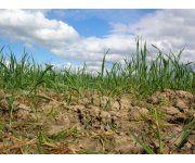 Soil management could make or break climate change response efforts