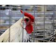 Harper Government Strengthens Canadian Poultry Research