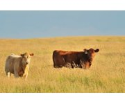 Canada, Applications for Western Livestock Price Insurance Now Available