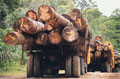 Forest industries a priority in Europe