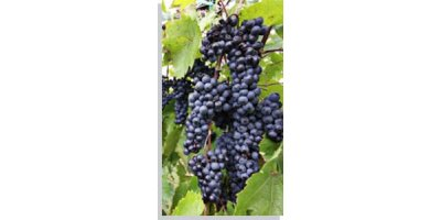 Aeration and mixing technologies for winery wastewater treatment