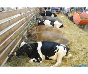 Bovine TB information note: strengthening cross compliance TB controls