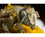 Bees & Pesticides: Commission to proceed with plan to better protect bees