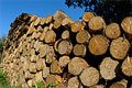 Environmental & industry groups commend new US ban on illegal wood imports