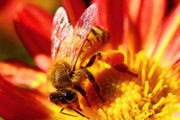 EU study on bee-killing pesticides increases pressure for ban expansion