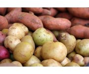 Potato professionals from all over the world at PotatoEurope 2014