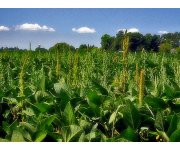 USDA Announces Measures to Help Farmers Diversify Weed Control Efforts