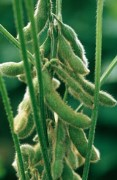 Bayer CropScience to acquire the seed business of Granar S.A.